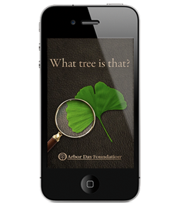 Arbor Day Foundation's What Tree Is That?